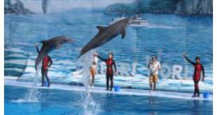 Dolphin show at the Safari World dolphinarium in Bangkok, Thailand