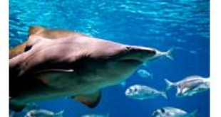 Costa Rica Proposes New Shark Finning Law