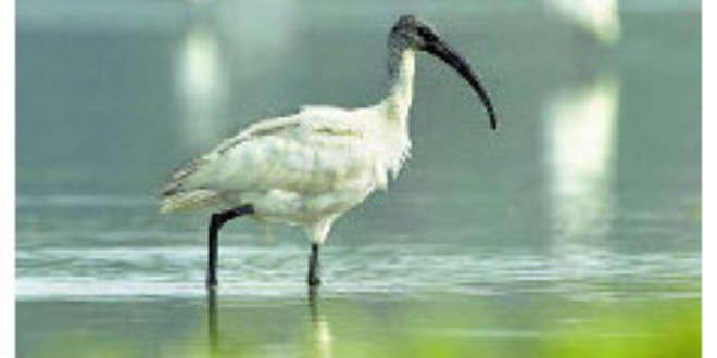 Large number of Kerala animals, plants in Red List - Ocean