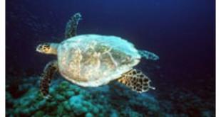 Light pollution deters nesting sea turtles