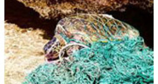 Mexico risks U.S. trade embargo after deaths of more than 700 endangered loggerhead sea turtles