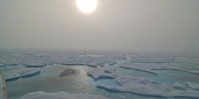 Arctic biodiversity under serious threat from climate change, according to new report