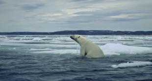 polar-bear-outdoorsman