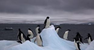 640px-Adelie Penguins on iceberg