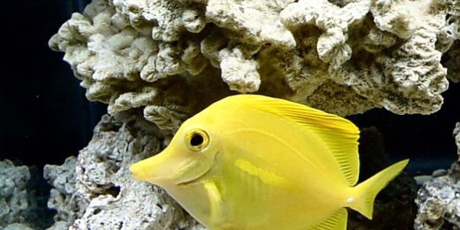 hawaii s tropical fish under assault from aquarium collectors win