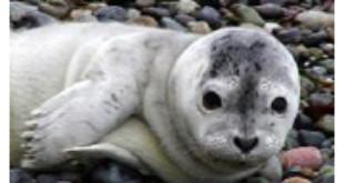 Central Puget Sound Marine Mammal Stranding Network From king5.com