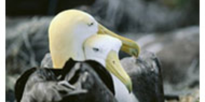Many Albatross species are endangered from fao.org