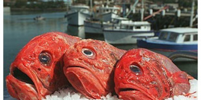 Our oceans overfished to feed the pigs
