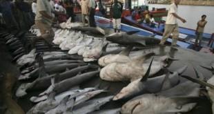 From sharkdivers.blogspot.com