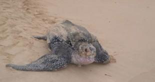 ©Brendan Godley. University of Exeter, Centre for Ecology & Conservation. OCEANA