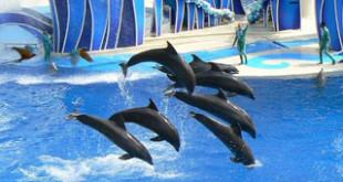 Dolphin captivity at SeaWorld