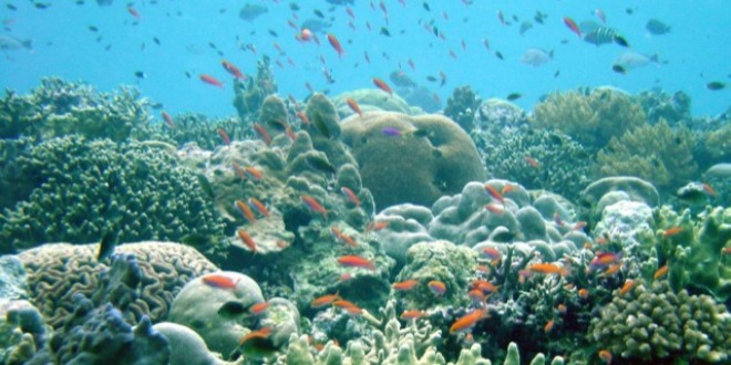 Declining Corals May Drastically Affect Crustacean Biodiversity