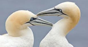 La malaria aviar amenaza las especies de aves en Galápagos