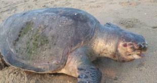 turtle-credits-ndtv