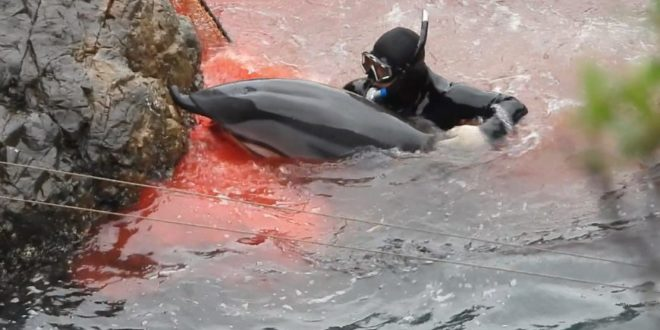 Credit: DolphinProject.com